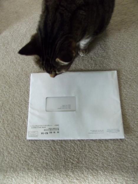 Big White Envelope & White Panther